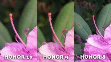 Fototest honor 10 - detail ruzova kvetina