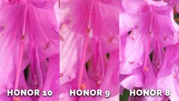 Fototest honor 9 - detail kvetiny