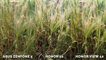 Který telefon fotí nejlépe? Asus Zenfone 5 vs. Honor 10 vs. Honor View 10 - priroda
