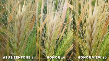 Fotí skvěle? Asus Zenfone 5 vs. Honor 10 vs. Honor View 10 - zelen