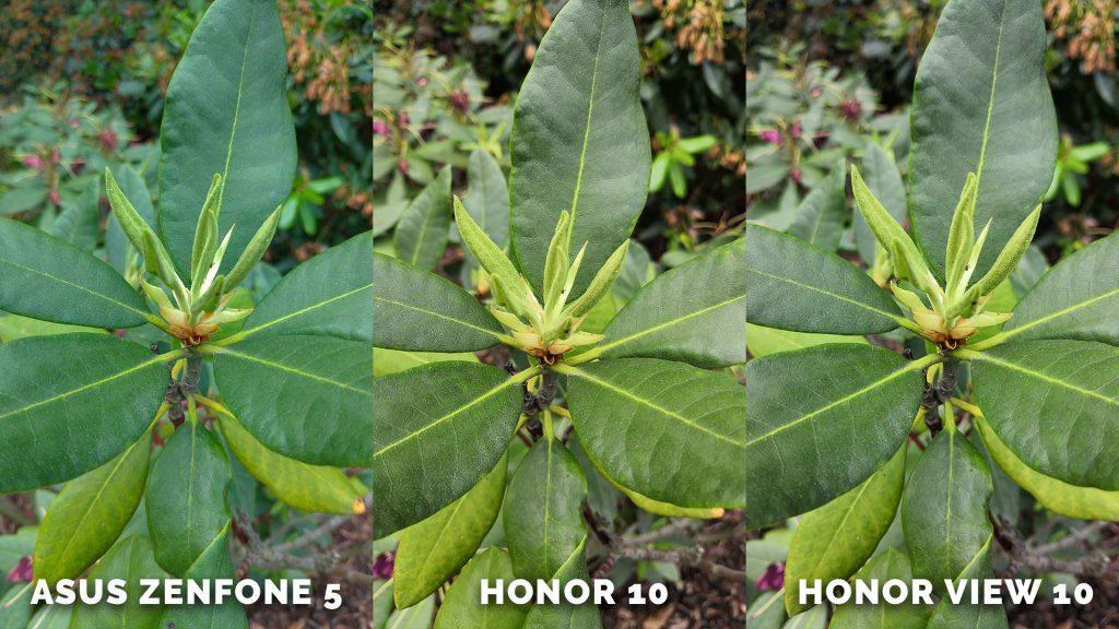 Listy - test focení - Asus Zenfone 5 vs. Honor 10 vs. Honor View 10 25