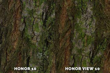 honor 10 fotí skvěle strom detail