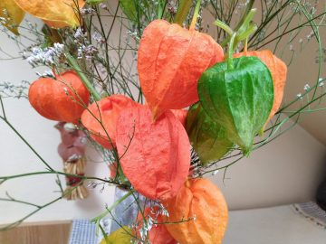 Elephone U Pro fotografie sušené rostliny